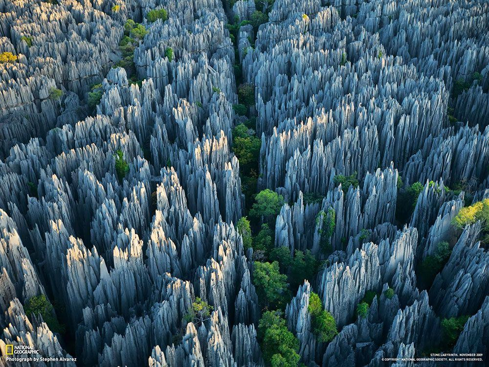 stone-forest1
