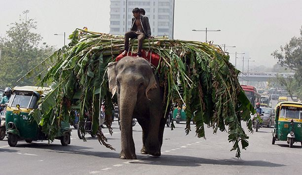 indian-elephant-on-road