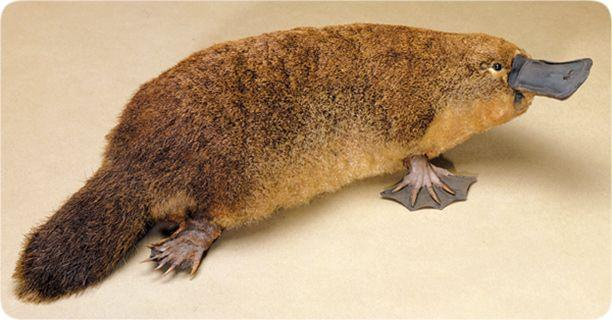 lifesciences-platypus