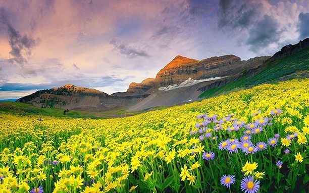 valley-of-floewrs