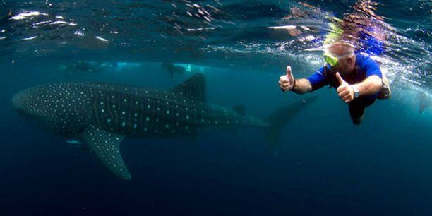 whale-shark at Ningaloo Reef