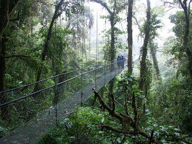 Sky Walk, Montverde Forest, Costa Rica