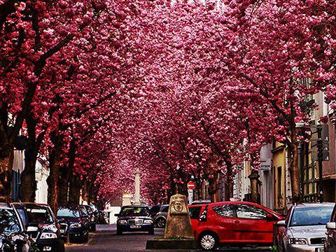 15 of the world�s most beautiful tree tunnels and how to