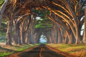 cypress1