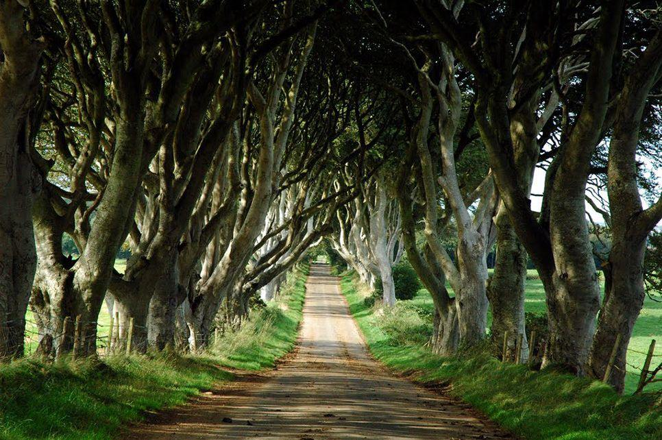 dark-hedges1