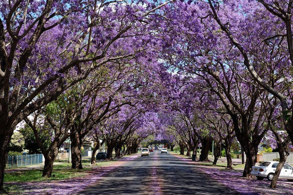 15 of the World's Most Beautiful Tree Tunnels (And How to ...