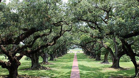 oak-alley3