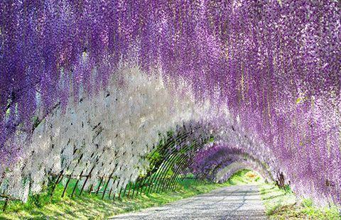 15 Of The World S Most Beautiful Tree Tunnels And How To Get There Flavorverse