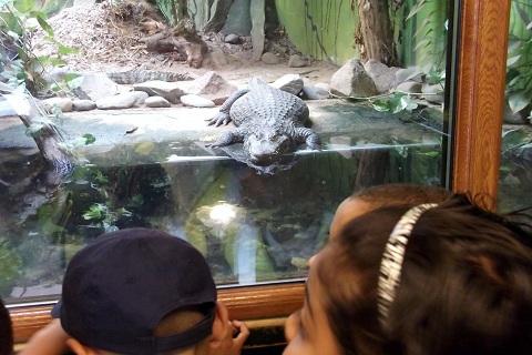 blackpool zoo2