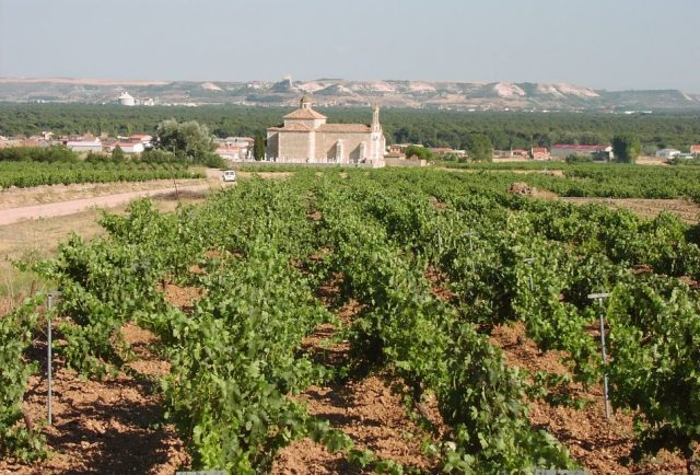 Day Trip to Ribera del Duero