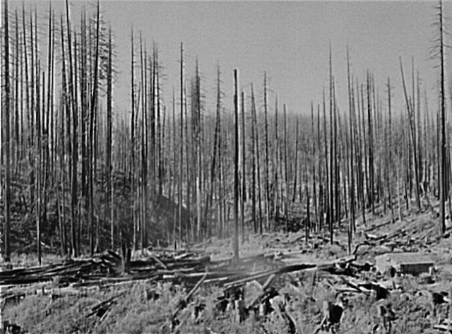 Idiotville Tillamook Burn