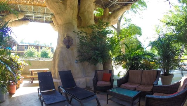 Deluxe Tree House Rentals in Texas