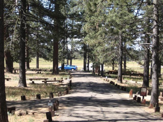 Laguna Pine Forest Campsite