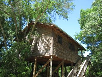 Magical Tree House Cottage for Rent in Texas