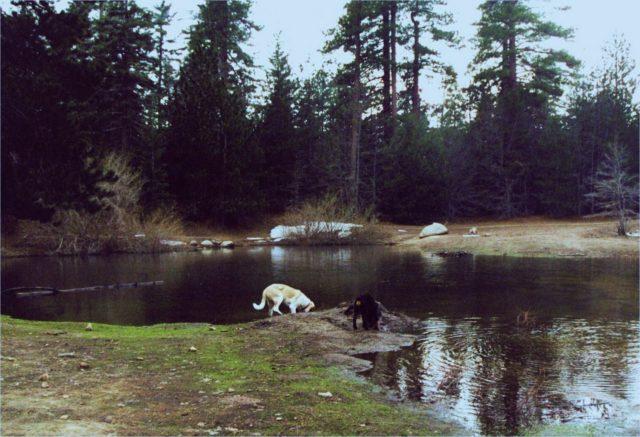 San Bernardino Dispersed Camping Southern California