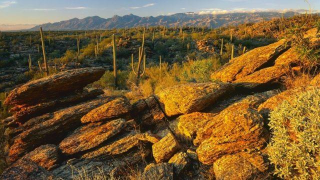 Cactus National Park Arizona Saguaro Park