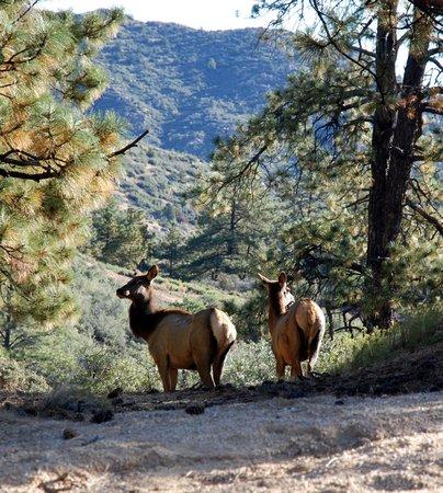 National Parks in Arizona Hualapai Mountain Park