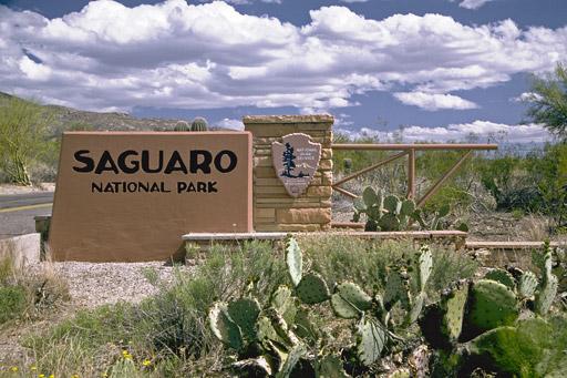 Saguaro National Park Tucson Arizona