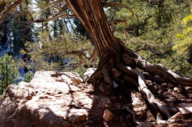 Flagstaff AZ Hiking Trails Sandys Canyon