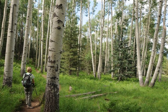 Flagstaff Hikes Kachina Trail