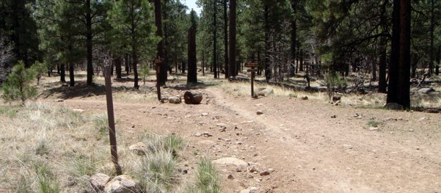 Flagstaff Hikes Oldham Trail