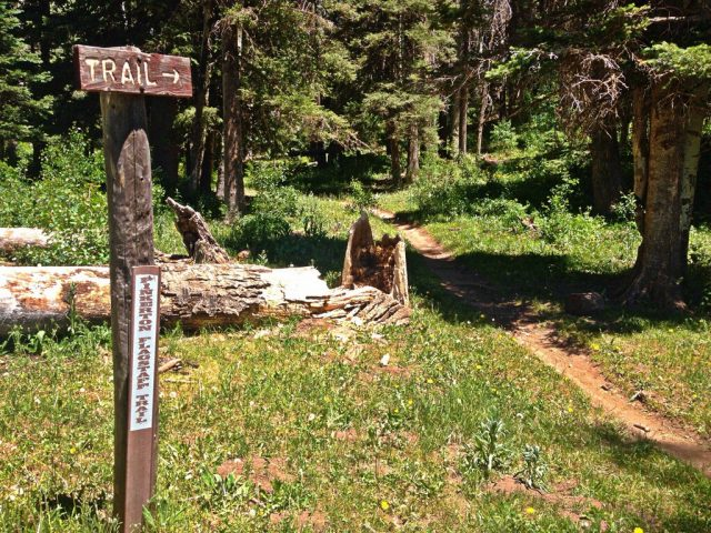 Flagstaff Hiking Trails Pinkerton