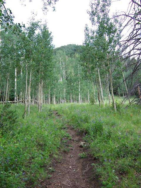 Hikes in Flagstaff Weatherford Trail