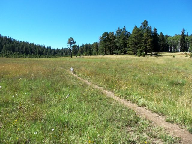 Hiking Trails Flagstaff Brookbank Trail