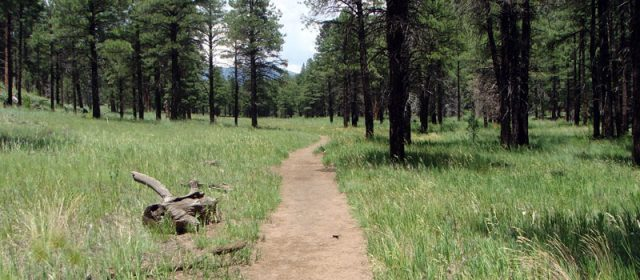 Hiking in Flagstaff Arizona Sandys Canyon Trail