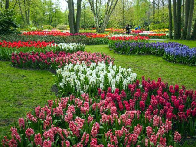 Amsterdam One Day Trip Keukenhof Gardens