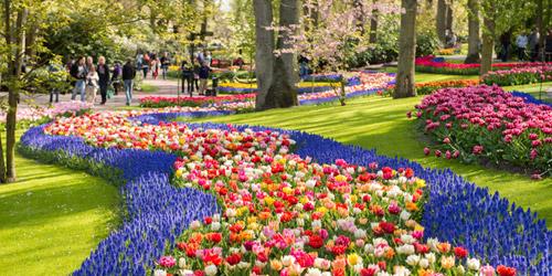 Day Trips Amsterdam Keukenhof Gardens