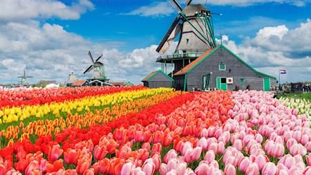 Day Trips from Amsterdam Keukenhof Gardens