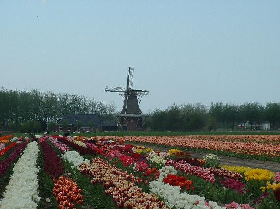 Day Trips in Amsterdam Groningen
