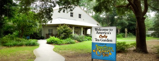Things to do for Free in Charleston SC Charleston Tea Plantation