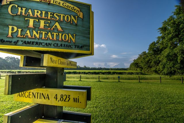 Things to do in Charleston SC for Free Charleston Tea Plantation