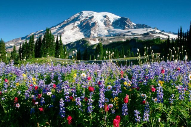 Day Trips from Seattle Mount Rainier
