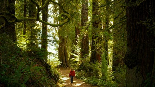 Seattle Day Trips Olympic National Park