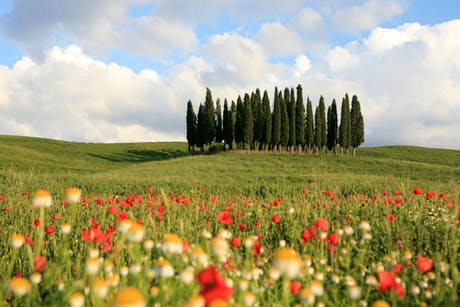 Day Trip from Florence Val d'Orcia
