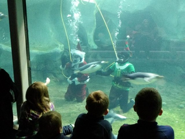 Free Things to do in Kansas City Zoo Entry