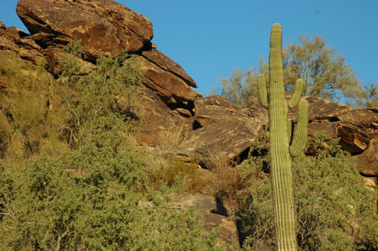 Hiking Trails Phoenix's South Mountain Park Preserve