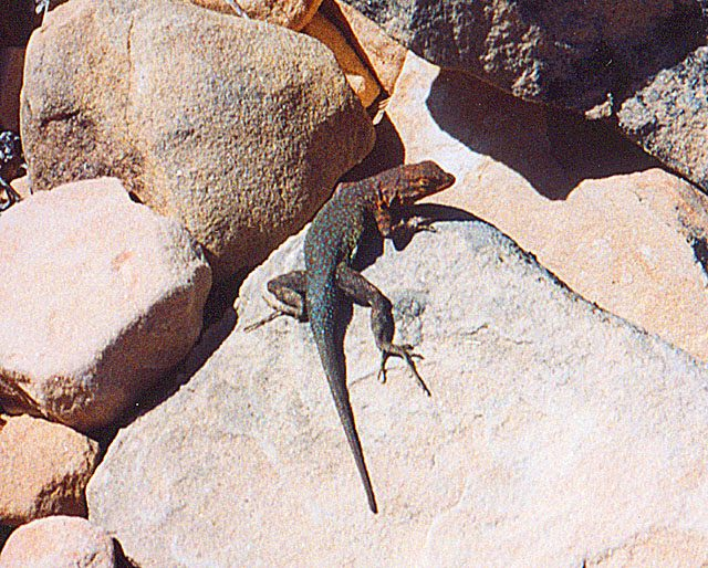 Phoenix Hiking Trail Thunderbird Conservation Park AZ