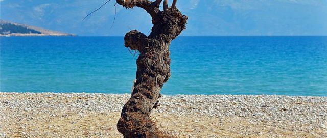 Vela Plaža Baška Best Beach in Croatia