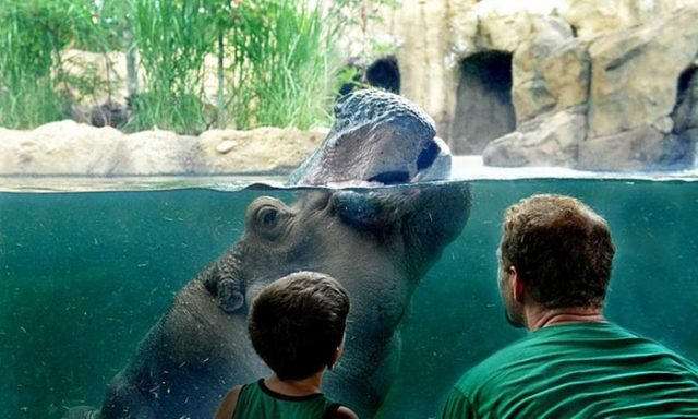 Free Things Cincinnati Zoo on the Mother's Day Sunday