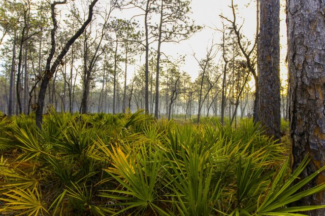 Apalachicola National Forest Free Camping Florida