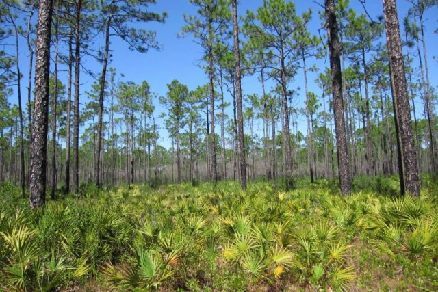 Apalachicola National Forest Free Camping in Florida