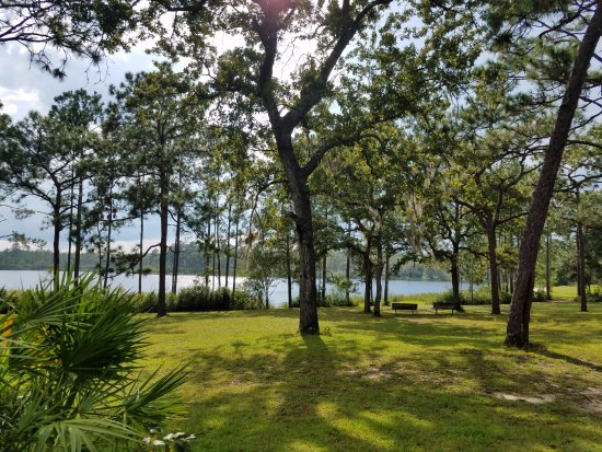 Apalachicola National Forest Place to Camp in Florid for Free