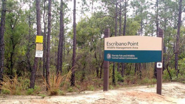Escribano Point Free Camping in Florida