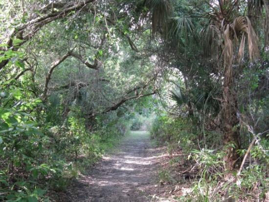 Hickory Hammock WMA Florida Camping