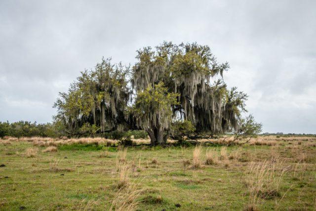 Hickory Hammock WMA Free Camping in Florida