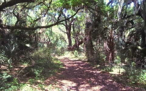 Hickory Hammock WMA Place to Camp in Florida Free